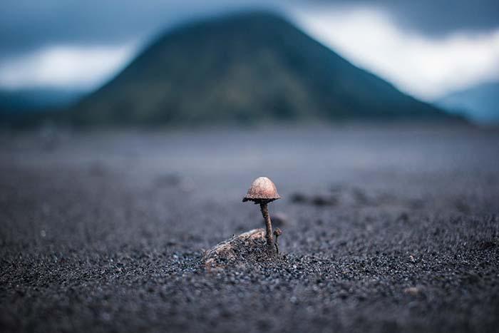 Un pequeño hongo tiene la clave para crear un hormigón capaz de repararse a sí mismo